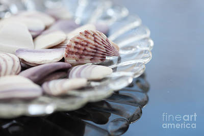 Photograph - Gifts From The Sea by Kay Pickens