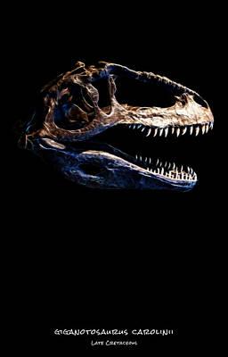 Photograph - Giganotosaurus Skull 1 by Weston Westmoreland