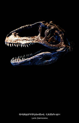Photograph - Giganotosaurus Skull 2 by Weston Westmoreland