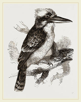 Kingfisher Drawing - Gigantic Kingfisher by Litz Collection