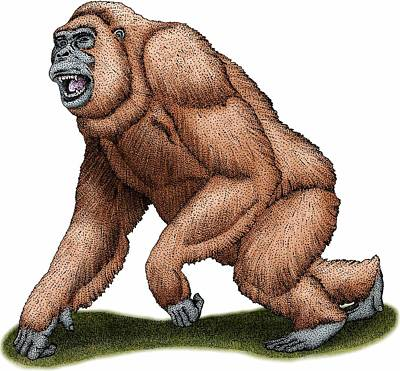 Photograph - Gigantopithecus by Roger Hall