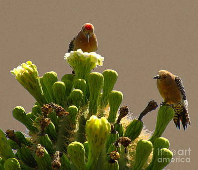 Photograph - Gila Woodpecker Pair by Marilyn Smith