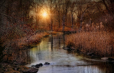 Photograph - Gilded Brook by Robin-Lee Vieira