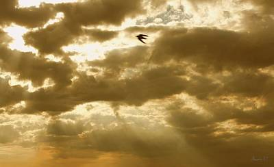 Photograph - Gilded Flight by Amanda Holmes Tzafrir