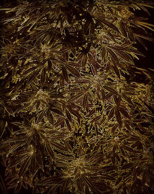 Photograph - Gilded Glory by Jeanette C Landstrom