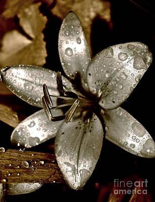 Gilded  Lilies 2 Art Print by Linda Bianic