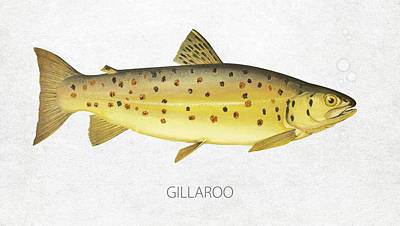 Fish Species Digital Art - Gillaroo by Aged Pixel