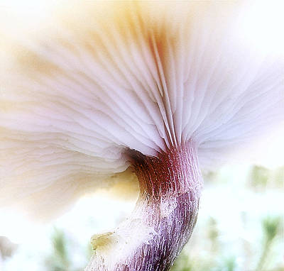 Photograph - Gills by Louise Kumpf