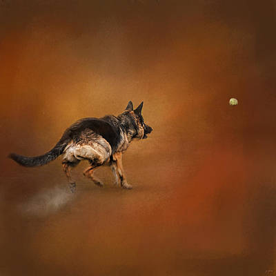 Photograph - Gimme That Ball - German Shepherd by Jai Johnson