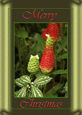 Blooming Digital Art - Ginger Lily Pine Cone Christmas by Carolyn Marshall
