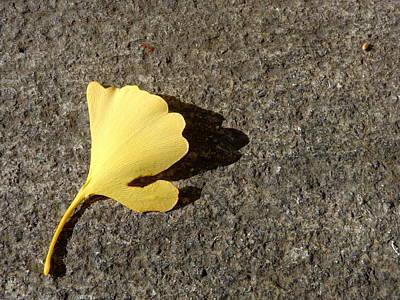 Photograph - Ginkgo Leaf by Joseph Skompski