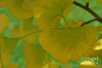 Ginkgo Leaves Abstract Art Print