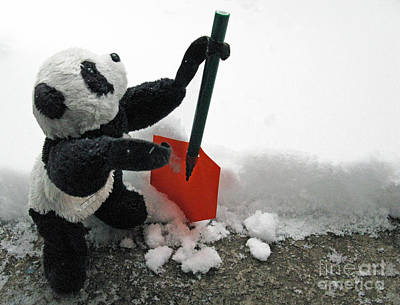 Photograph - Ginny The Baby Panda In Winter #02 by Ausra Huntington nee Paulauskaite