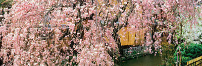 Cherry Blossoms Photograph - Gionshirakawa Cherry Blossom Kyoto Japan by Panoramic Images