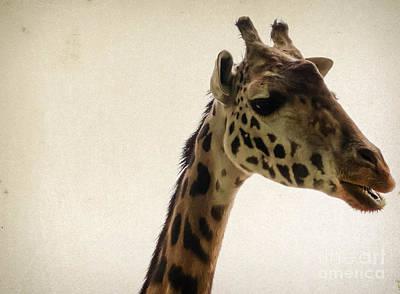 Photograph - Giraffe 2 by Andrea Anderegg