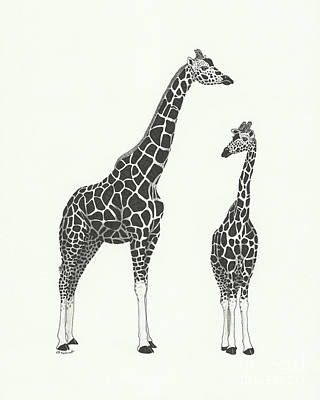 Drawing - Giraffe And Calf by E B Schmidt