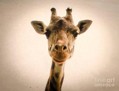 Photograph - Giraffe by Andrea Anderegg