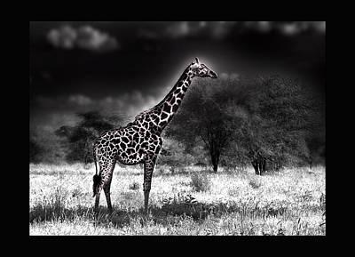 Giraffe Art Print by Christine Sponchia