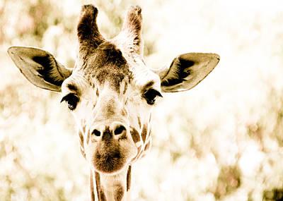 Photograph - Giraffe by Cindi Castro