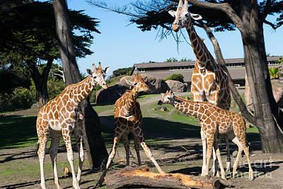 Somalia Photograph - Giraffe Dsc2863 by Wingsdomain Art and Photography
