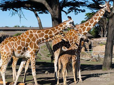 Somalia Photograph - Giraffe Dsc2875 by Wingsdomain Art and Photography