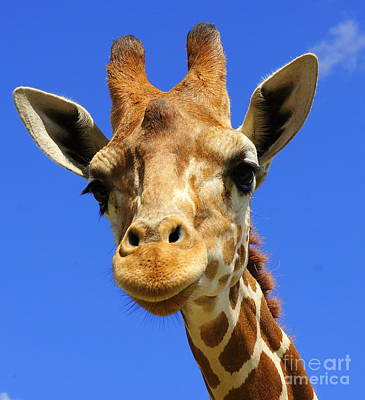 Photograph - Giraffe Eyes by Rachel Munoz Striggow