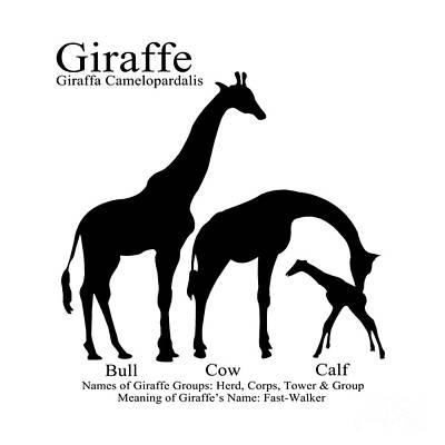 Digital Art - Giraffe Family by Jackie Farnsworth