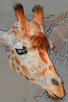 Giraffe Head Vertical Crop A Art Print by David Lee Thompson