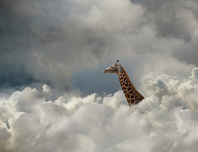Photograph - Giraffe In The Cloud by John Lund