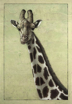 African Animals Drawing - Giraffe by James W Johnson