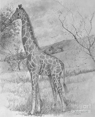 Drawing - Giraffe by Jim Hubbard