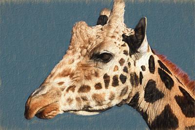 Giraffe- Kibo Art Print by Donna Kennedy