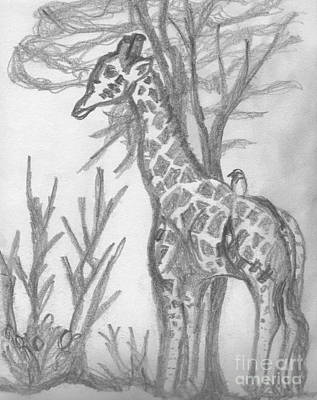 Drawing - Giraffe by Mary Mikawoz
