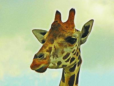 Photograph - Giraffe by MTBobbins Photography