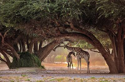 Gaze Photograph - Giraffe - Namibia by Giuseppe D\\\'amico