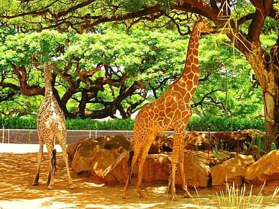 Giraffes Art Print