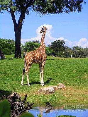 Art Print featuring the photograph Giraffe On A Spring Day by Jeanne Forsythe