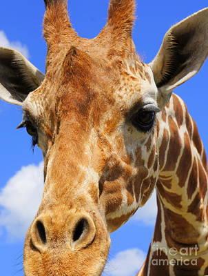 Photograph - Giraffe Selfie by Rachel Munoz Striggow