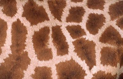 Pattern Photograph - Giraffe Skin by Nigel Downer