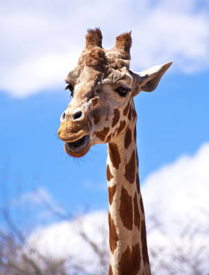 Photograph - Giraffe Speak by Marilyn Hunt