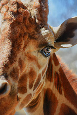 Photograph - Giraffe Stare Down by Emily Stauring