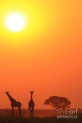 Photograph - Giraffe Tranquility - Wildlife Beauty From Africa by Hermanus A Alberts