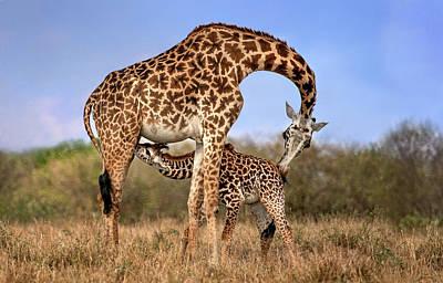 Giraffe With Cup Art Print