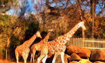 Giraffes At The Zoo Art Print by Dan Sproul
