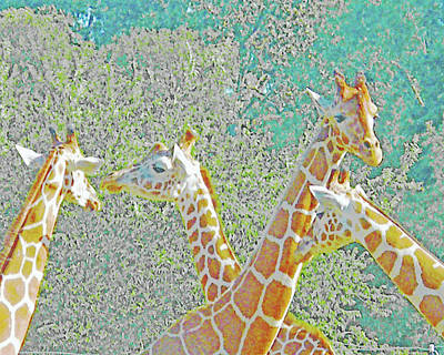 Digital Art - Giraffes by Lizi Beard-Ward