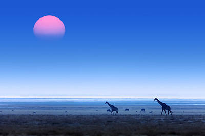 Giraffes On Salt Pans Of Etosha Print by Johan Swanepoel