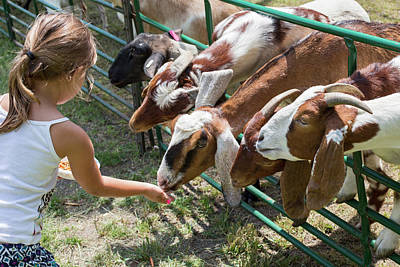 Girl Feeding Goats Art Print by Jim West