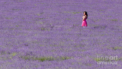 Photograph - Girl In A Lavender Field by Matt Malloy