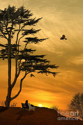 Red Tail Hawks Photograph - Girl On A Bench At Sunset by Tom York Images