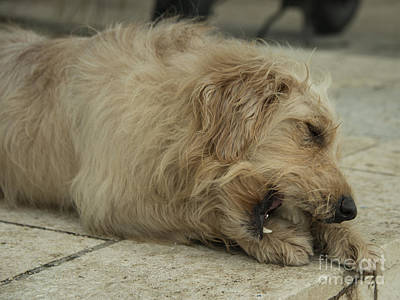 Gnawing Photograph - Give A Dog A Bone  by Rob Hawkins